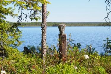 Puupölkky varvikossa järven rannalla.