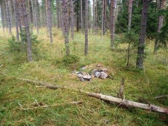 Kiviä sammaleisella maalla.