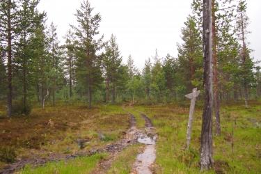Kaksiurainen polku, joka johtaa matalakasvuiseen metsään.