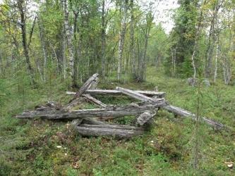 Hirsiä suunnilleen neliön muodossa matalakasvuisessa metsässä.