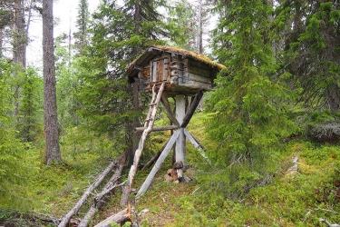 Pieni mökki korkealta katkaistun kannon päällä metsässä.
