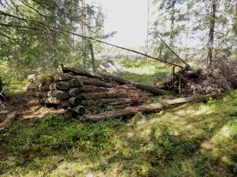 Matala ja lahonnut puurakennuksen nurkka hakkuuaukean laidalla.