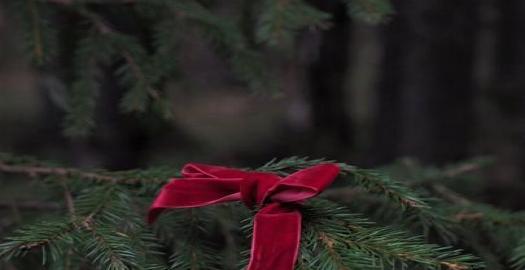 Facebook: Joulukuusi ja metsäseikkailu viitosella Eräluvat-kaupasta.  #joulukuusi #joulupuu...