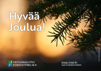 Kuva joulukortista, kuusen havu ja teksti Hyvää joulua!