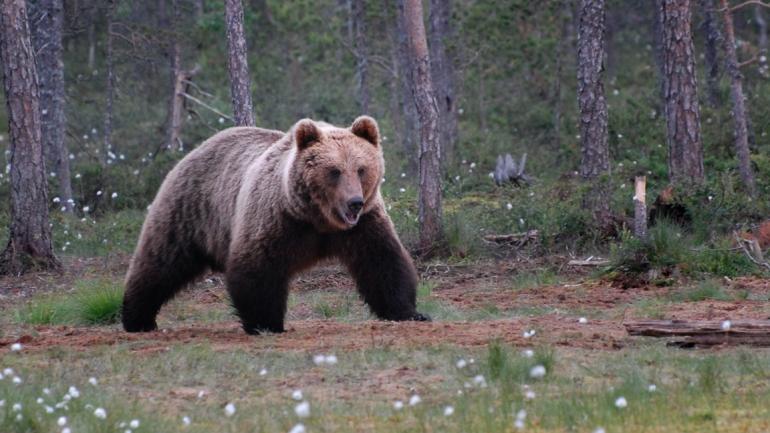 Karhuluvat