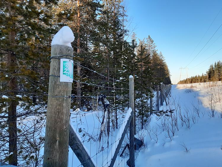 Lumisessa metsämaisemassa sähkölinjan suuntaisesti kulkee verkkoaita, jossa on puutolpat.